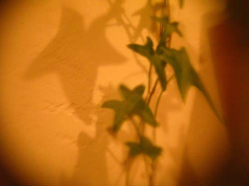 葉っぱと影